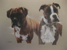 The Boxers by D Popple