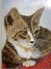 Tabby Kitten by J.Tindale  Watercolour